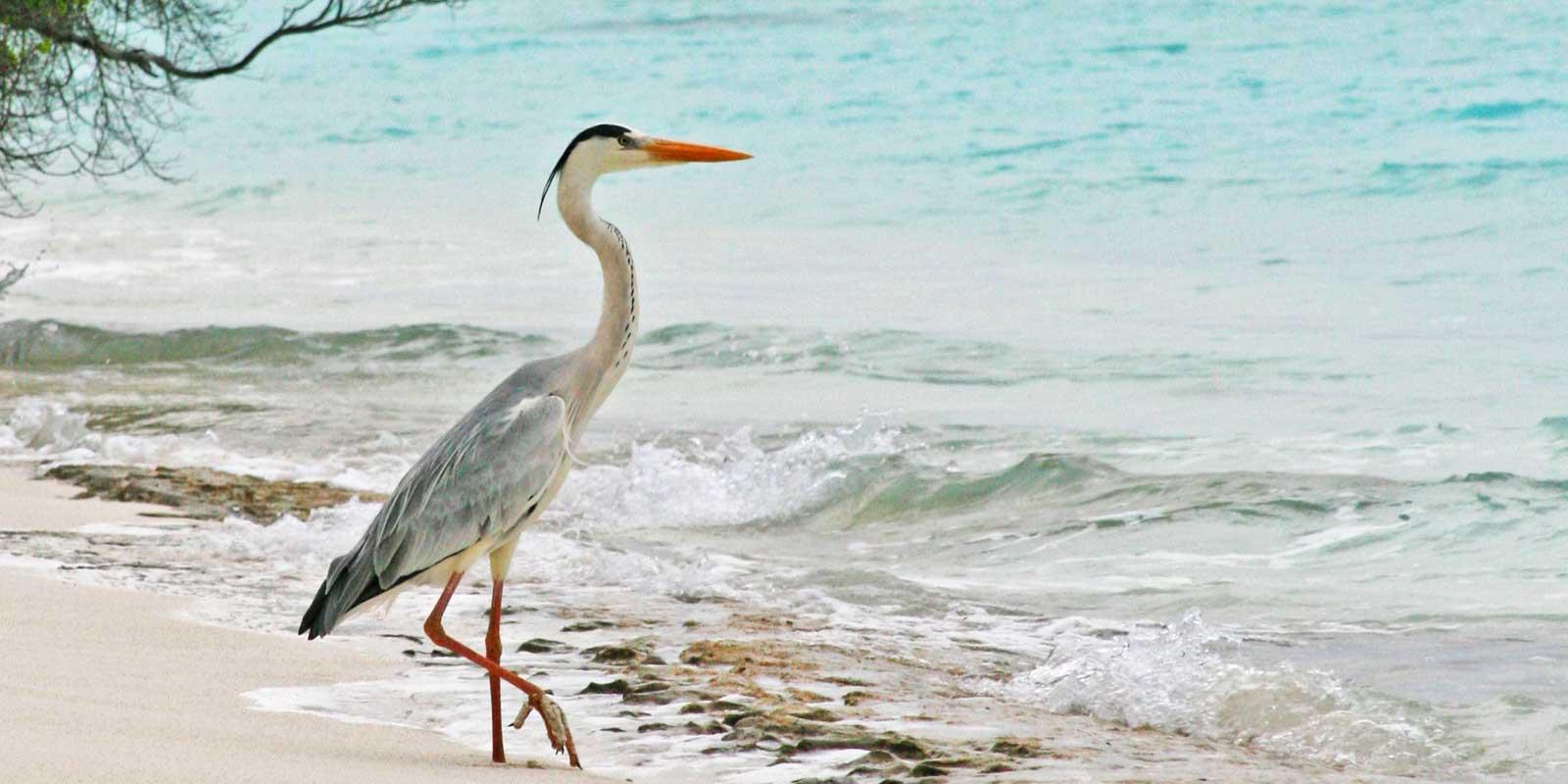 OCOA_SONEVA_FUSHI_RESORT_MALDIVES_10
